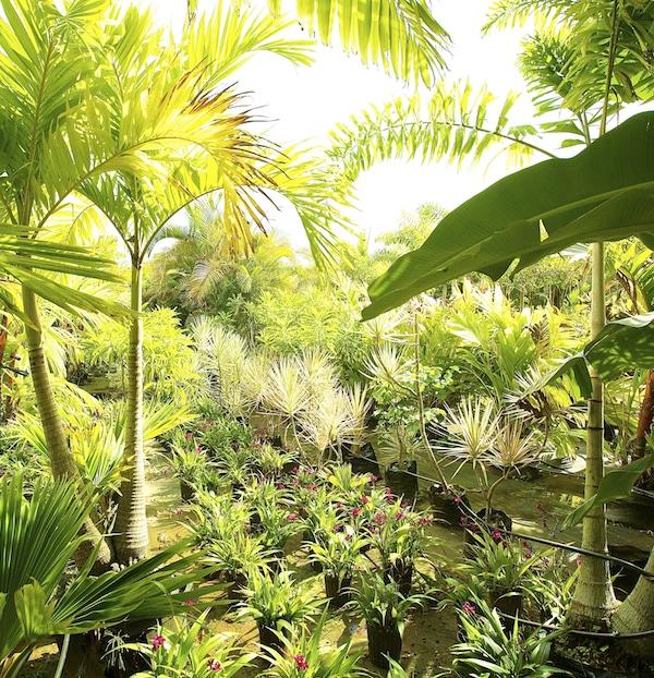 Kipapa Nursery Kauai