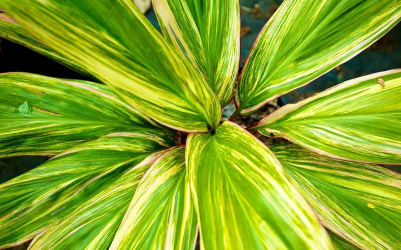 Oahu Rainbow Hybrid Ti