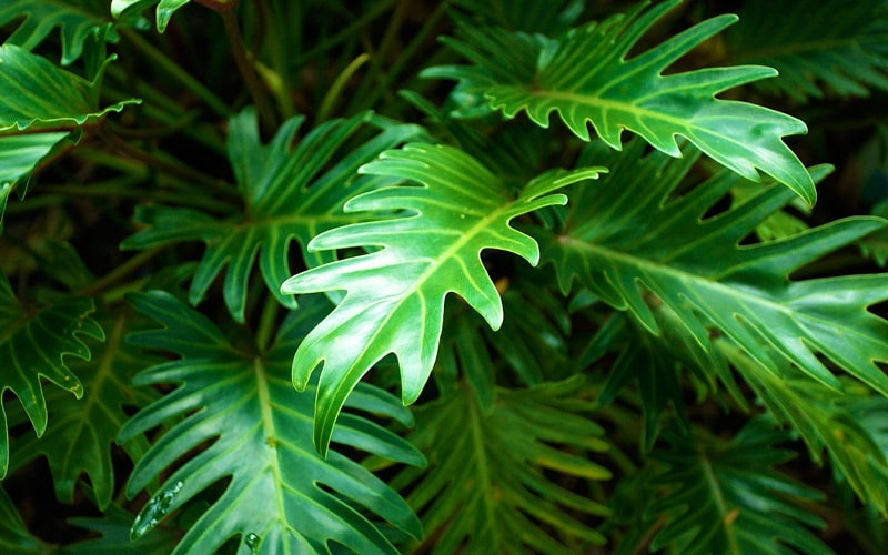 Ground Cover plants Kauai